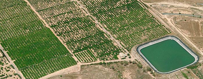 Proyecto explotacion agricola alicante 3de3 proyectos for Catastro alicante oficina virtual